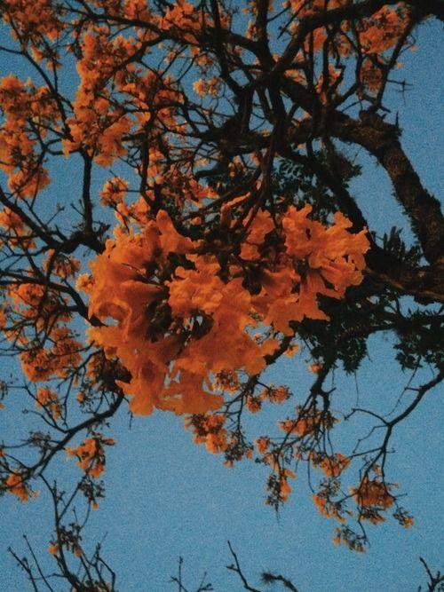 Orange Floral Wallpaper Iphone