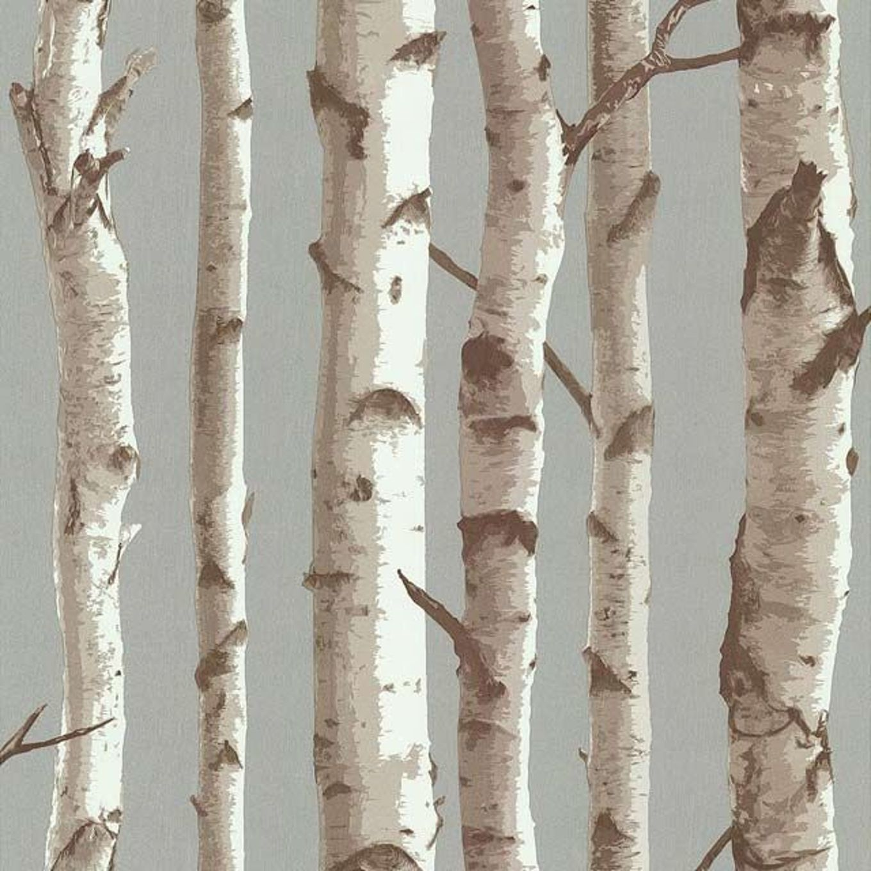 Papier Peint Bouleau Bois Bouleau En Anglais Gris Wiki 10001259 Papier Peint Bouleau Papier Peint Bouleau Papier Peint Papier Peint Texture Blanc