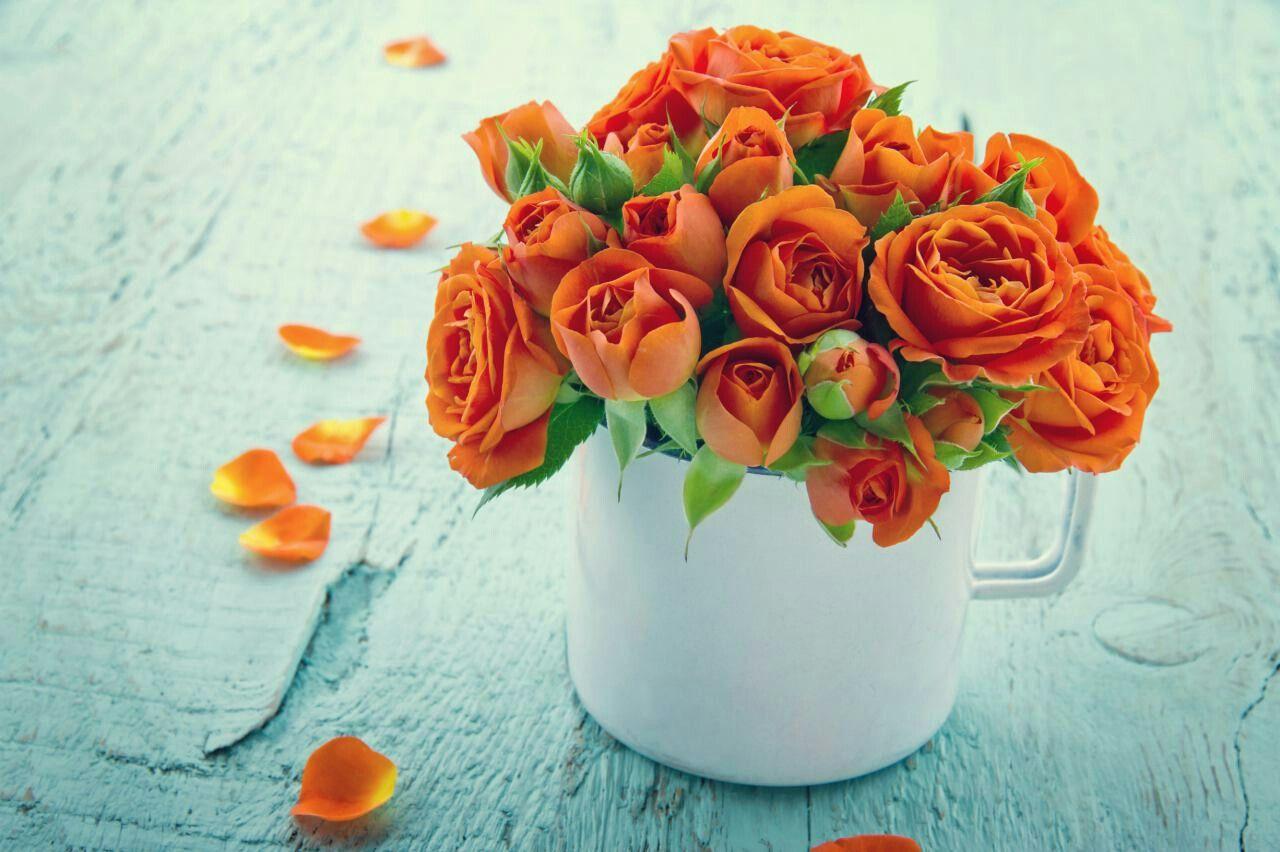 برتقالي ดอกไม ช อดอกไม ธรรมชาต