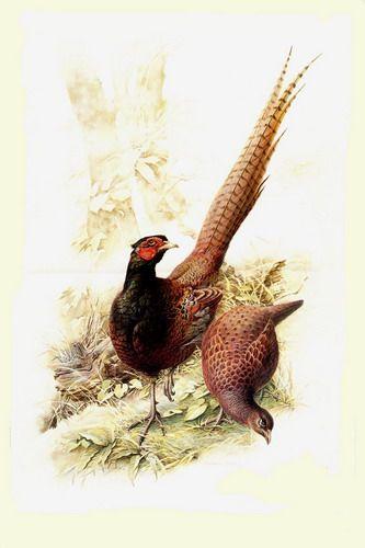 Красивые рисунки птиц фото 27 | Художники, Нарисовать птицу