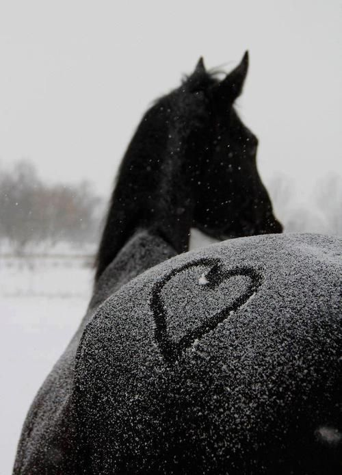 Heart on horses butt in the snow, horse photography
