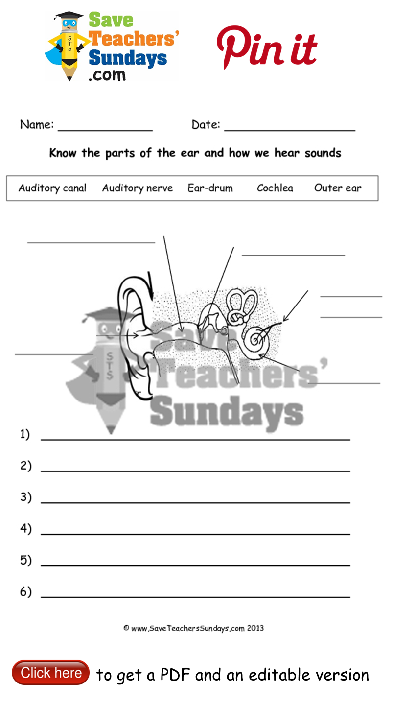 Worksheets Sound Science Worksheets the ear and hearing worksheet go to httpwww saveteacherssundays com scienceyear 4372lesson 3a how we hear t