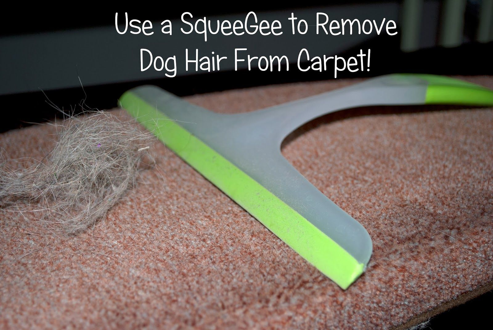 Use A Squeegee To Remove Dog Hair From Carpet Carpet Cleaning Hacks How To Clean Carpet Deep Carpet Cleaning