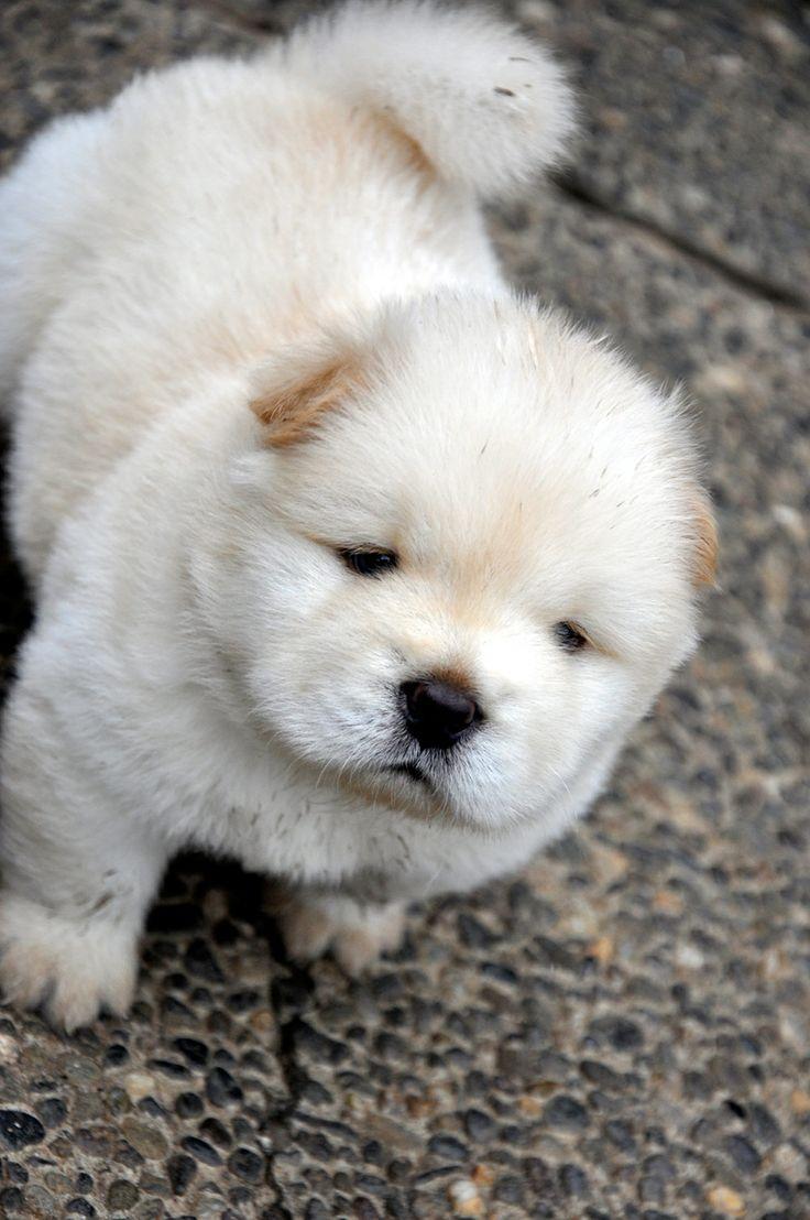 Great Chub Chubby Adorable Dog - ae829ab47f9576f737f02862ea0c516b  Image_714987  .jpg