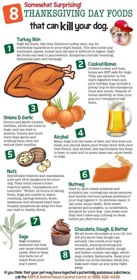 Things to avoid giving your dog at Thanksgiving