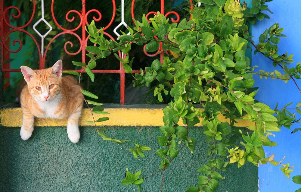 10 Cat-Safe Plants for Your Balcony Garden | Catster ...