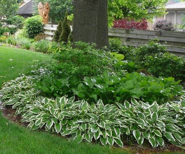 'hosta and mixed perennial bed'