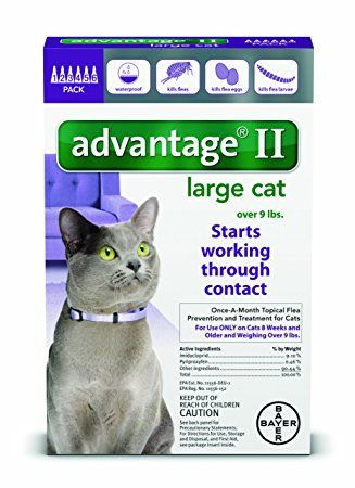 Bayer Advantage Ii Flea Prevention For Large Cats Over 9 Lb 6 Doses Cat Fleas Flea Control For Cats Large Cats