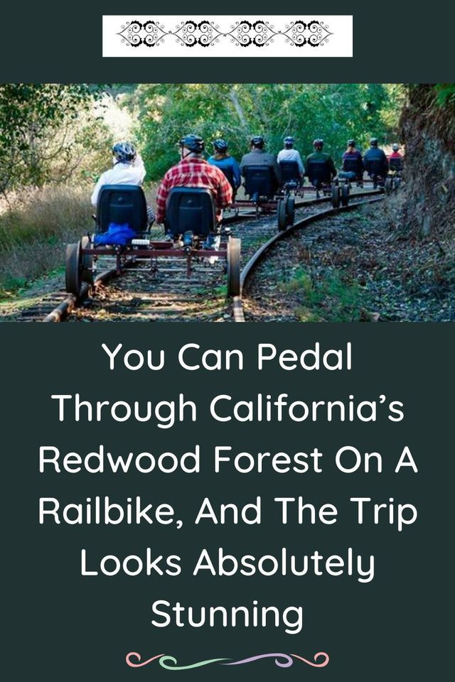 You Can Pedal Through California's Redwood Forest On A