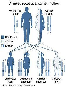 Charcot Marie Tooth Disease Duchenne Muscular Dystrophy