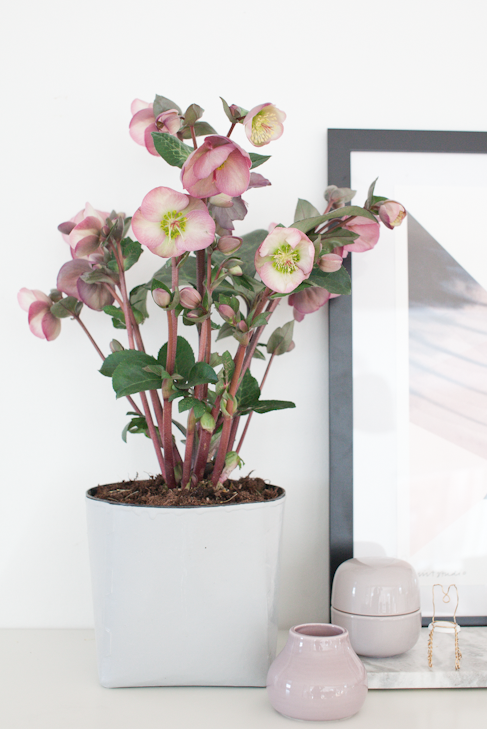Hviit // For deg som elsker interiør: Urban Jungle Bloggers #urbanjungle #homedecor #flowers