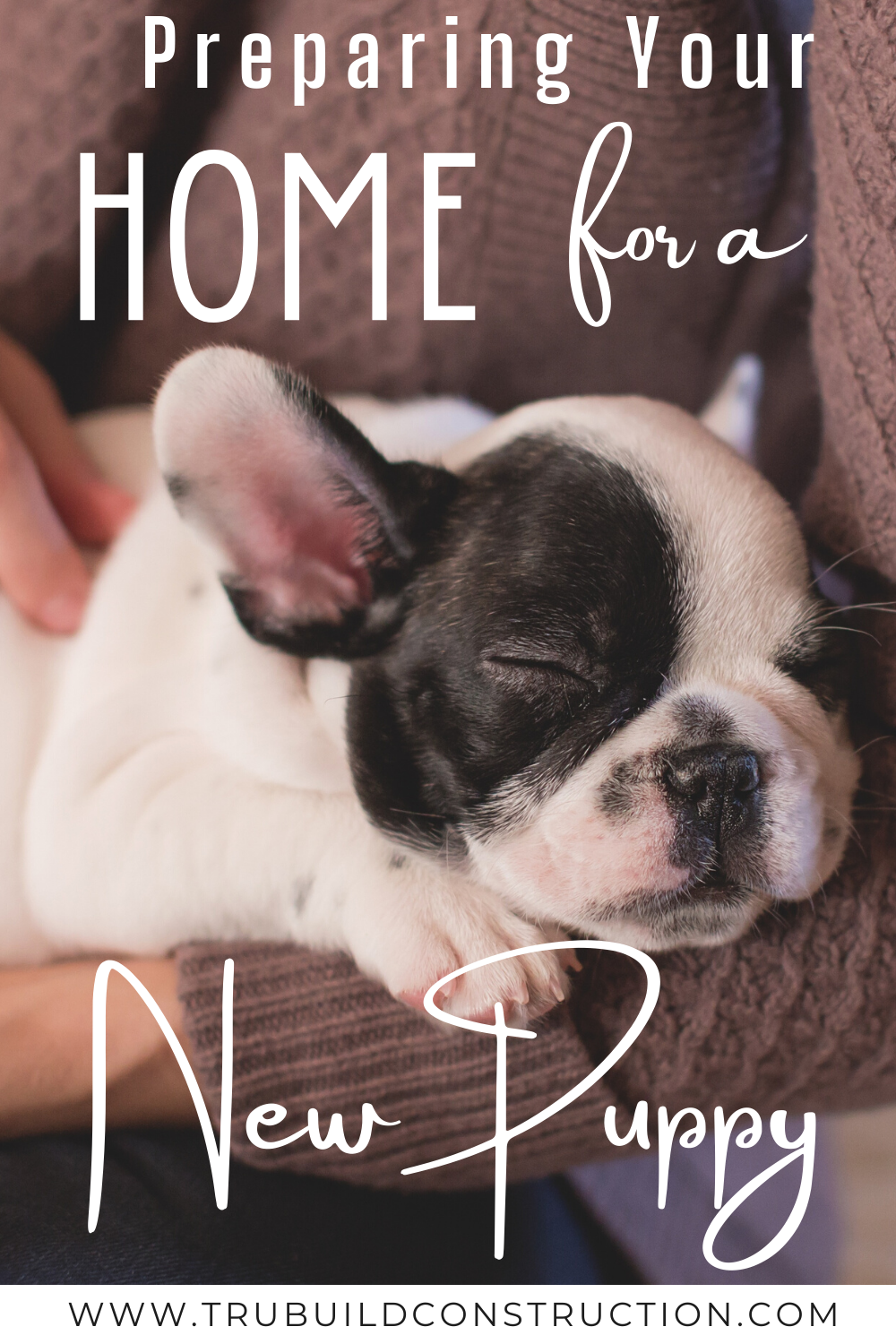 12 Things You Need To Get Your Home Ready For A New Puppy Trubuild Construction In 2020 New Puppy Pet Websites Puppies