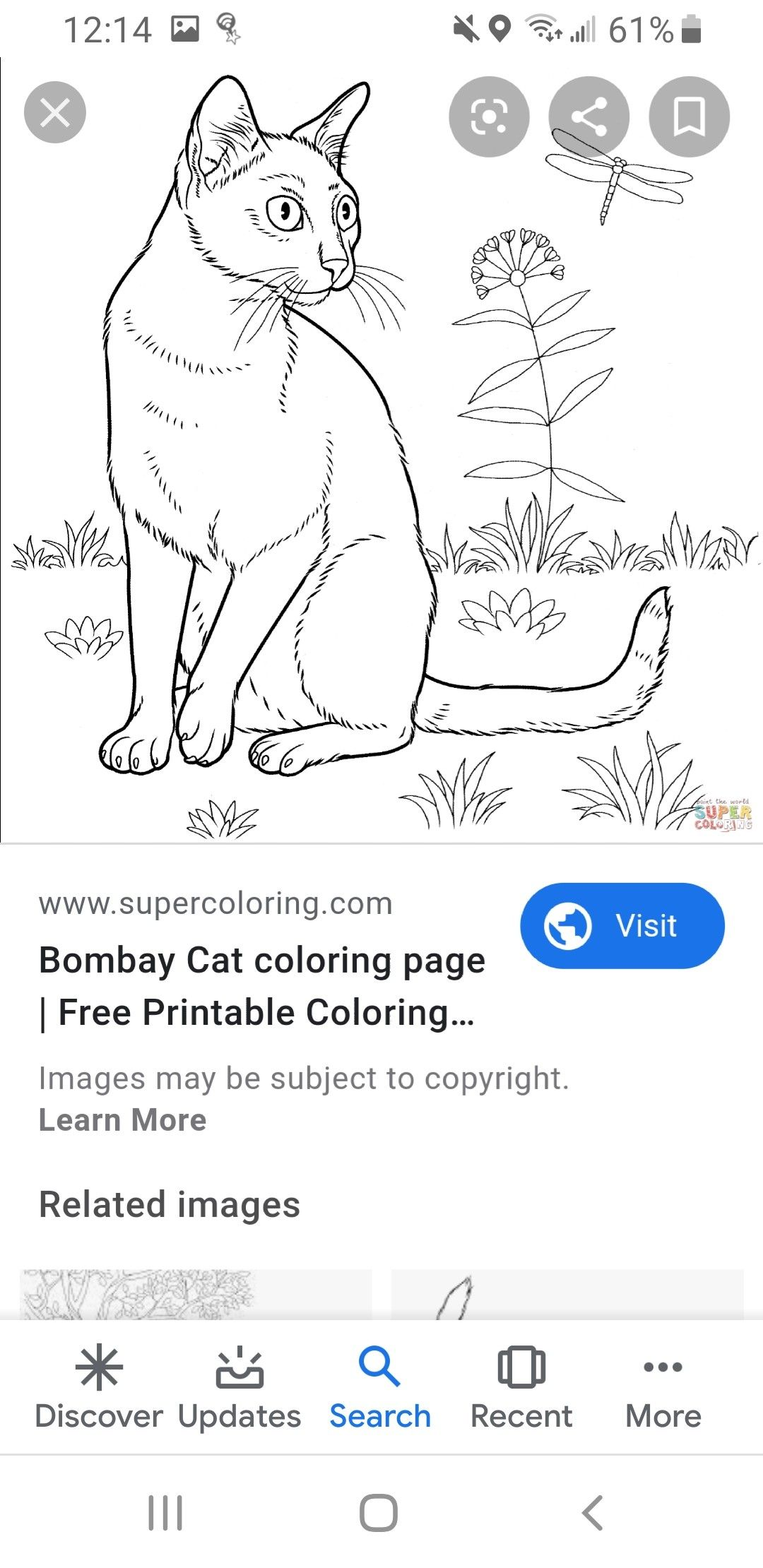 Pin By Alisha Watkins On Animal Drawings Free Printable Coloring Cat Coloring Page Coloring Pages