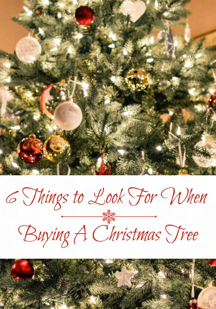 Real Christmas Trees Vs Artificial Trees 6 Things To Look For When Buying A Christmas Tree Types Of Christmas Trees Best Artificial Christmas Trees Real Christmas Tree