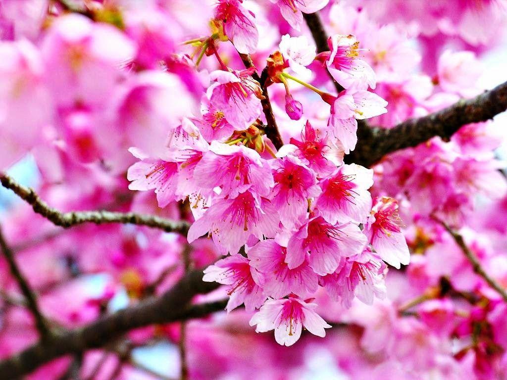 Wallpaper Bunga Cantik Untuk Android
