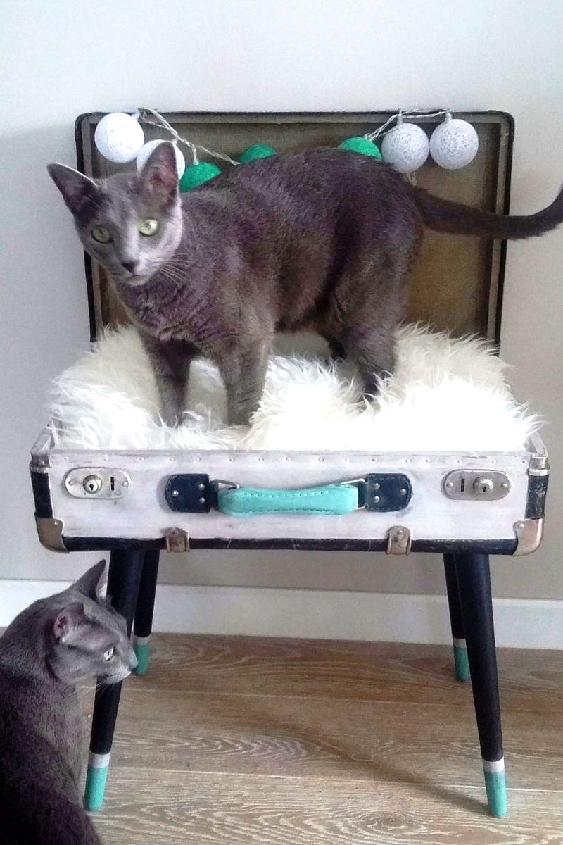 Bed For Cat Diy Old Suitcase Legowisko Dla Kota Ze Starej Walizki Cat Diy Cat Bed Old Suitcases