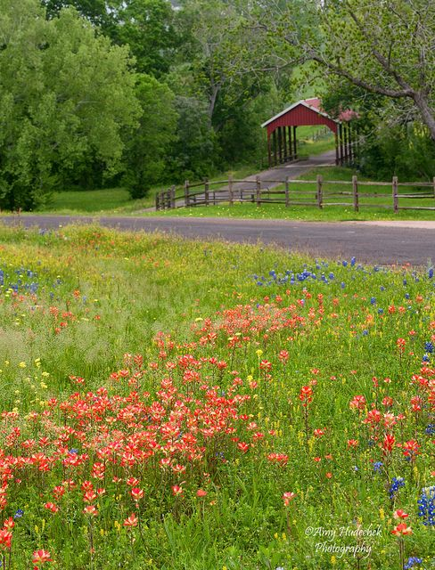 Texas Hill Country Covered Bridges Landscape Wild Flowers