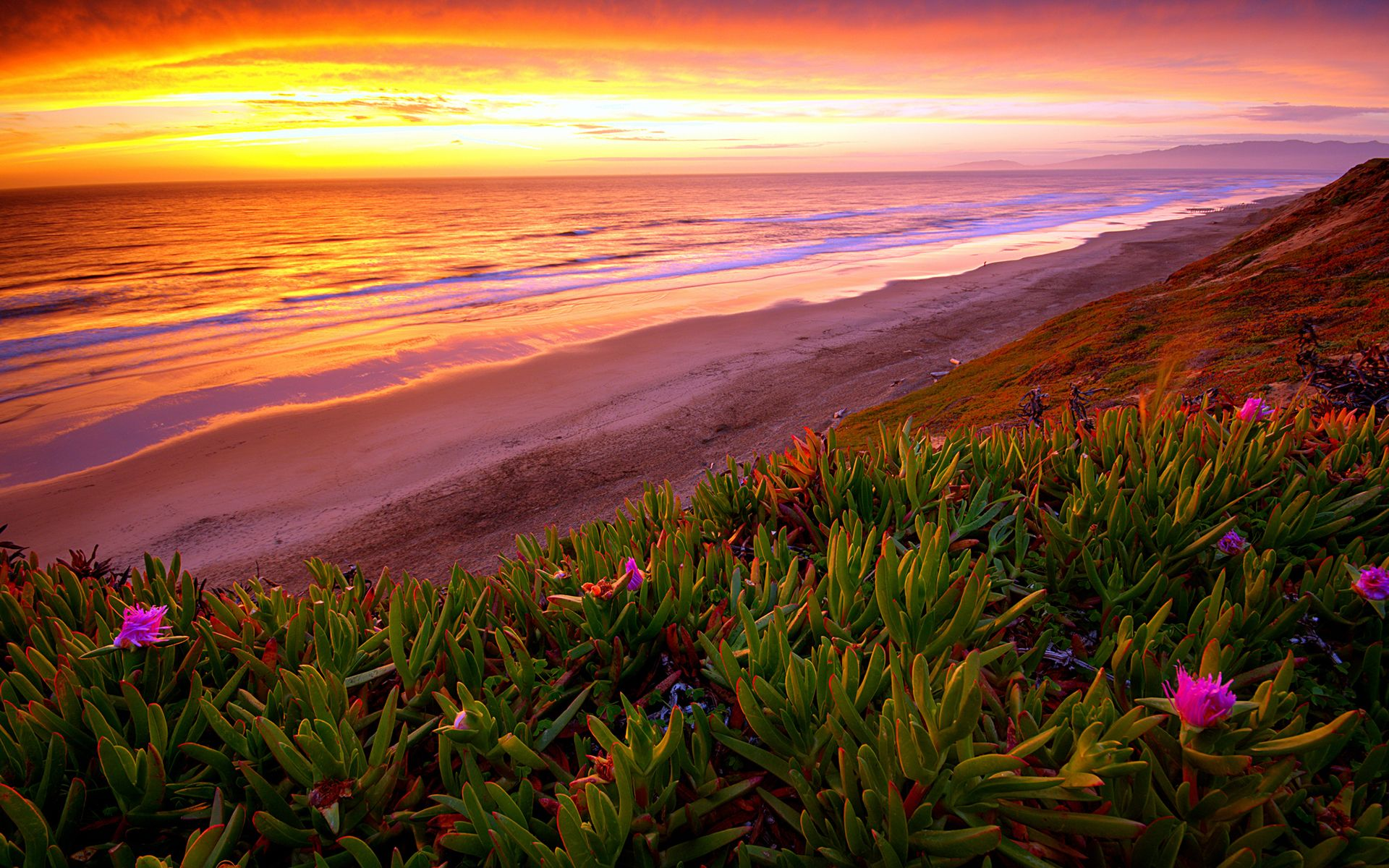 Flower Landscapes Ocean And Flowers Paintings Beach Ocean Sunset Plant Flowers
