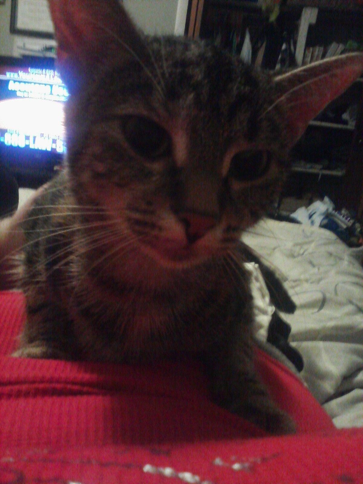 My KittyKat:Peaches♥