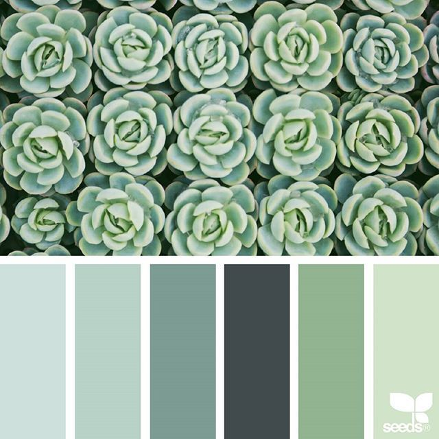 today's inspiration image for { succulent hues } is by @swgardens ... i know there are *a lot* of succulent loving Seeds supporters out there ~ to liven up your IG feed w/endless variations of these ethereal beauties, be sure to click over and follow @swgardens ... thank you for another fresh + inspiring #SeedsColor image share!