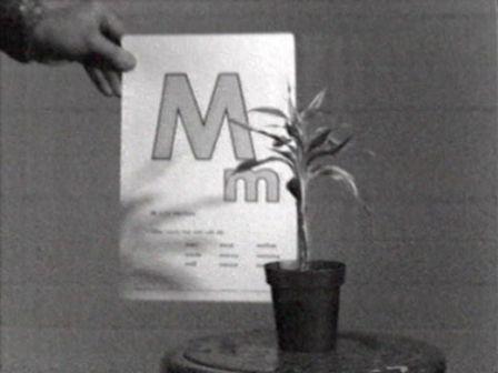 John Baldessari, Teaching a Plant the Alphabet, 1972, Courtesy Electronic Arts Intermix (EAI), New York