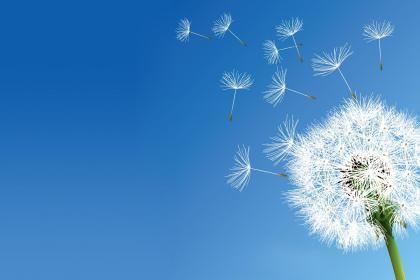 Dandelion Nature Flowers Clear Sky Hd Wallpaper Colagens Artisticas