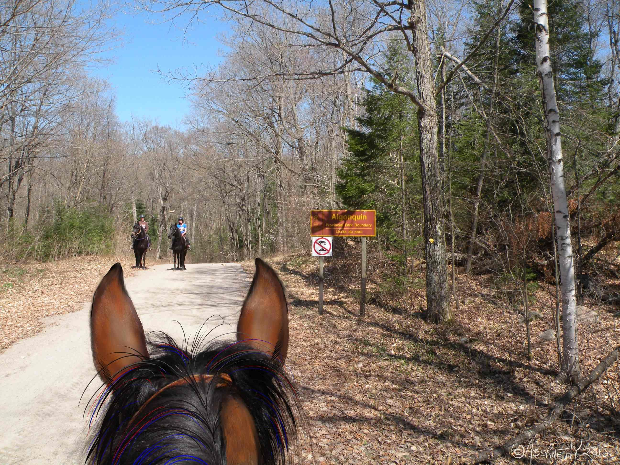 Algonquin Provincial Park is Canada's oldest Provincial park, established in 1893.  Horses used to work here hauling timber.  Now we explore the trails.