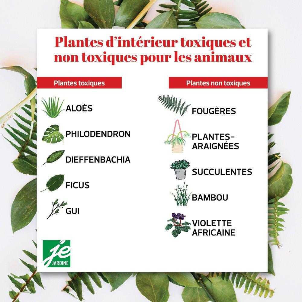 Plantes D Interieur Toxiques Et Non Toxiques Pour Les Animaux