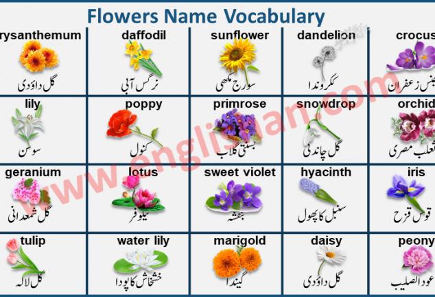 Englishan Learn English Grammar And Vocabulary Fast In 2020 Grammar And Vocabulary Vocabulary Flash Cards Learn English Grammar