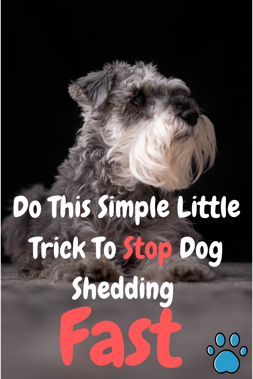 Are You Tired Of Cleaning Up Dog Hair Around Your Home All The Time Finding Your Dog S Shedding In Places In 2020 Stop Dog Shedding Dog Shedding Dog Shedding Remedies