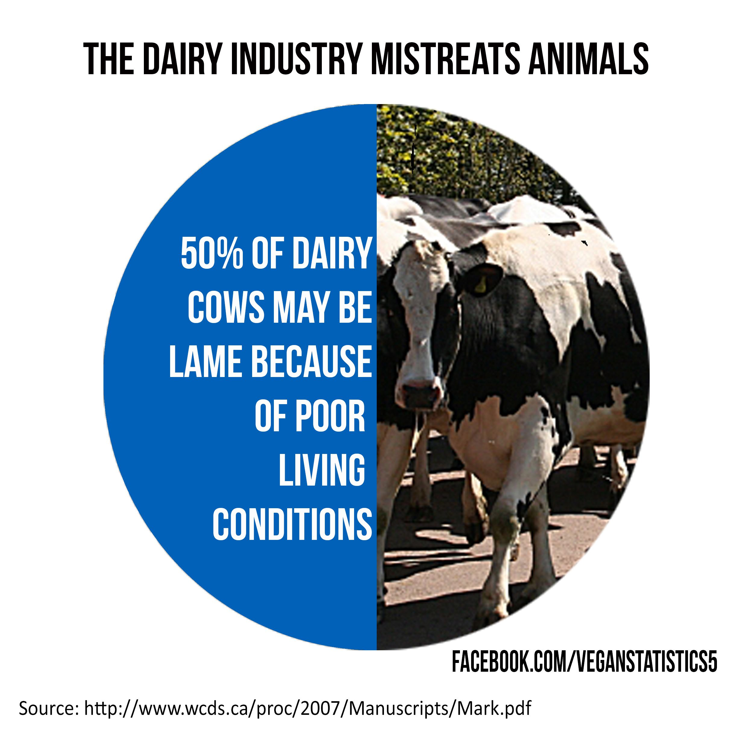 vegan vegetarian milk dairy cows cruelty animal rights vegan vegetarian milk dairy cows cruelty animal rights veganism