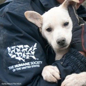 Charity Update The Humane Society Of The United States Humane Society Charity Swagbucks
