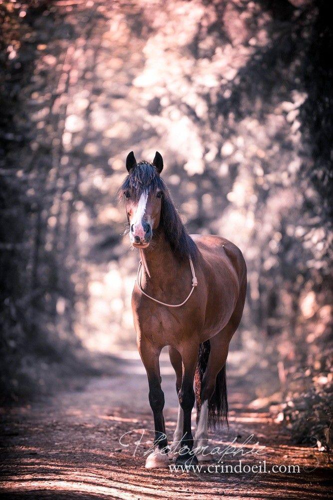 Un Regard Sur Le Cheval Crindoeil Photographie Equine Cheval Galop Photographie Equine Cheval