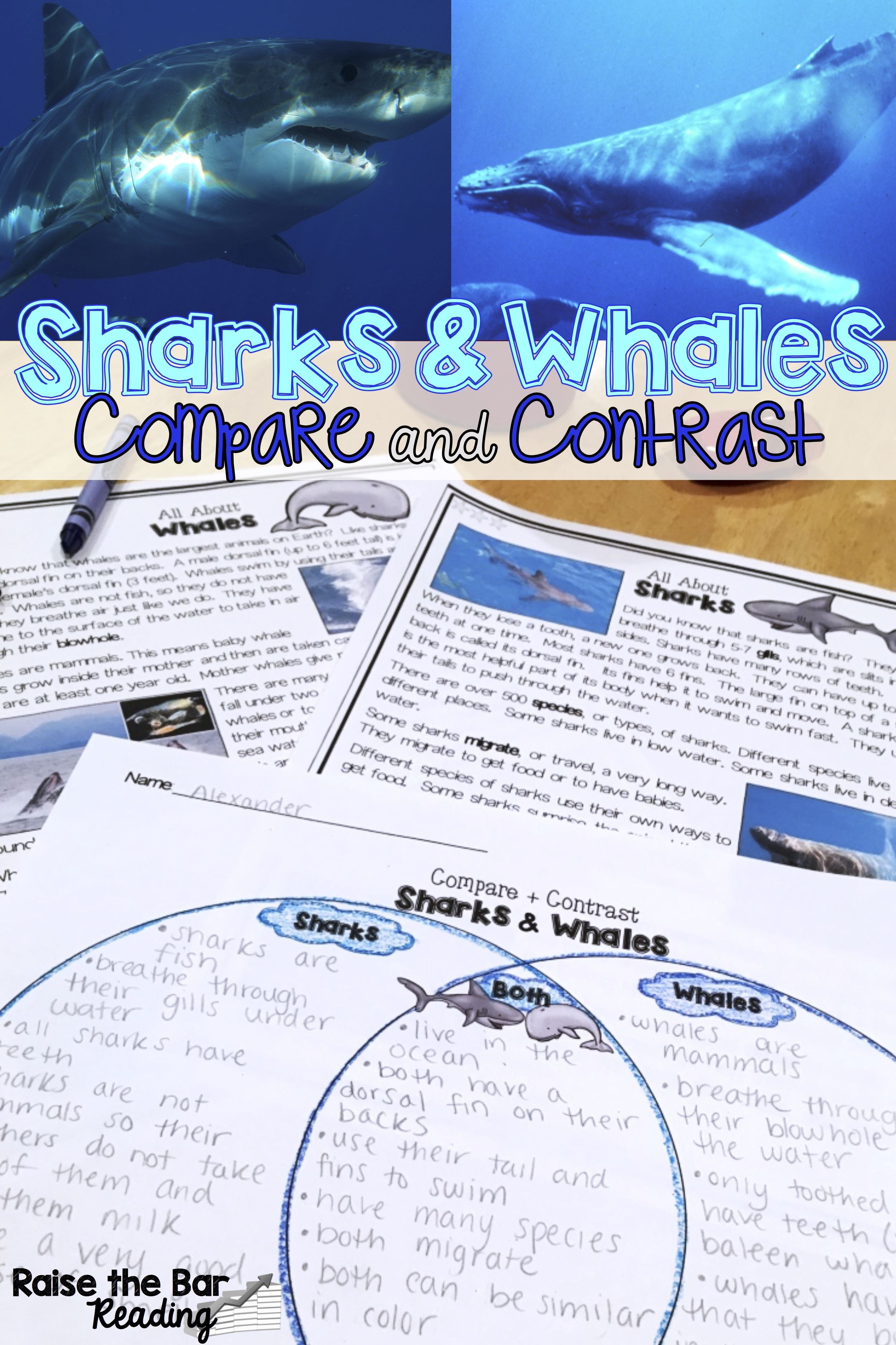 Whales And Sharks Compare And Contrast Differentiated