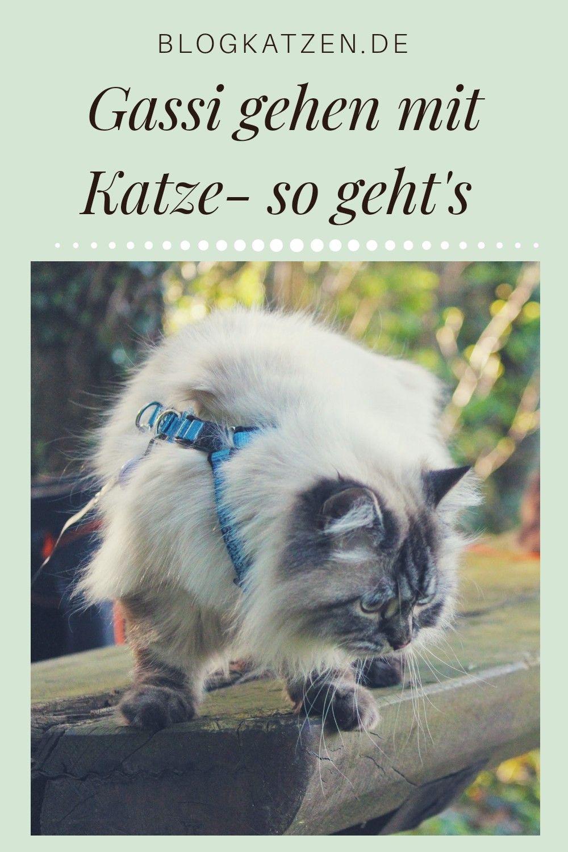 Pin auf Adventure Cats | Abenteuer mit Katzen | Katzen an ...