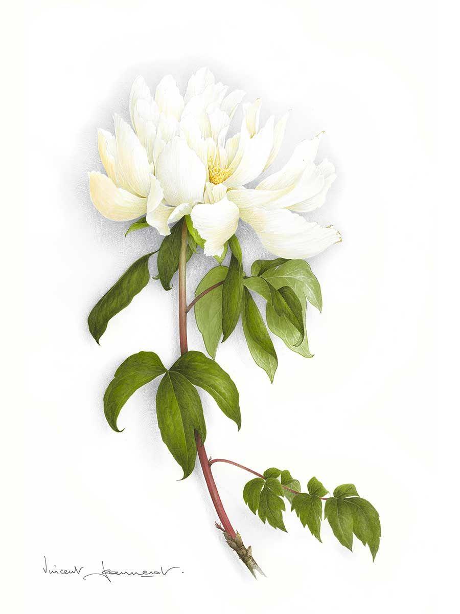 Watercolor Vincent Jeannerot Avec Images Aquarelle Fleurs