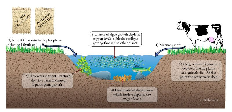 animals and rivers on pinterest : eutrophication diagram - findchart.co