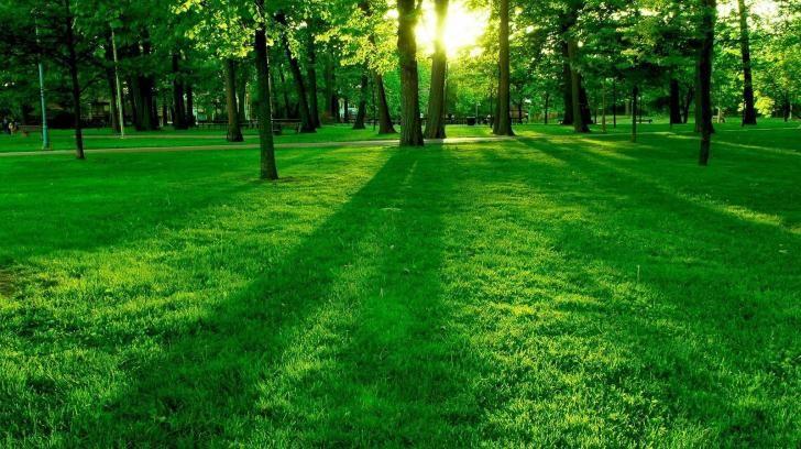 Summer Green Nature Wallpaper 1600 1200 Hd Desktop Wallpapers