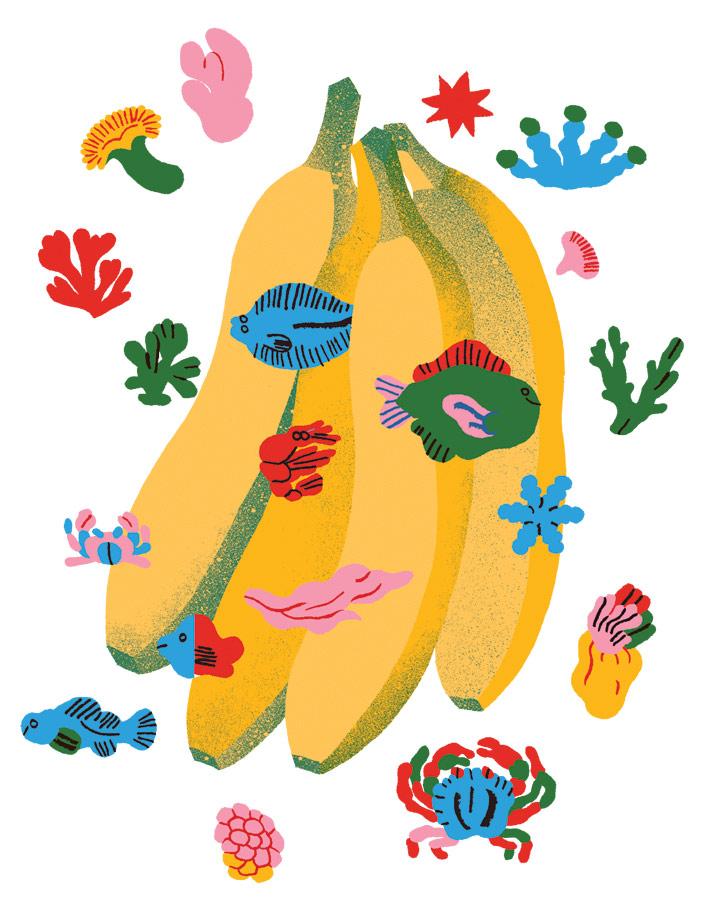 Illustrator Spotlight: Amanda Baeza