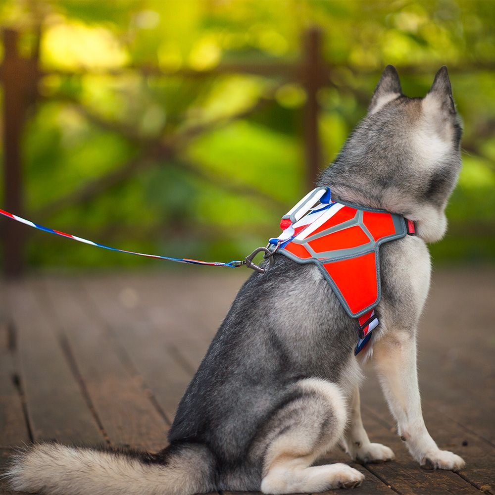 French Style Massage Dog Harness Www Qqpets Com Worldcupfinal