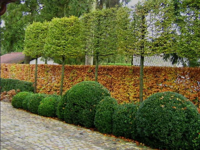 Autumn anne laansma garden architecture tuin tuin