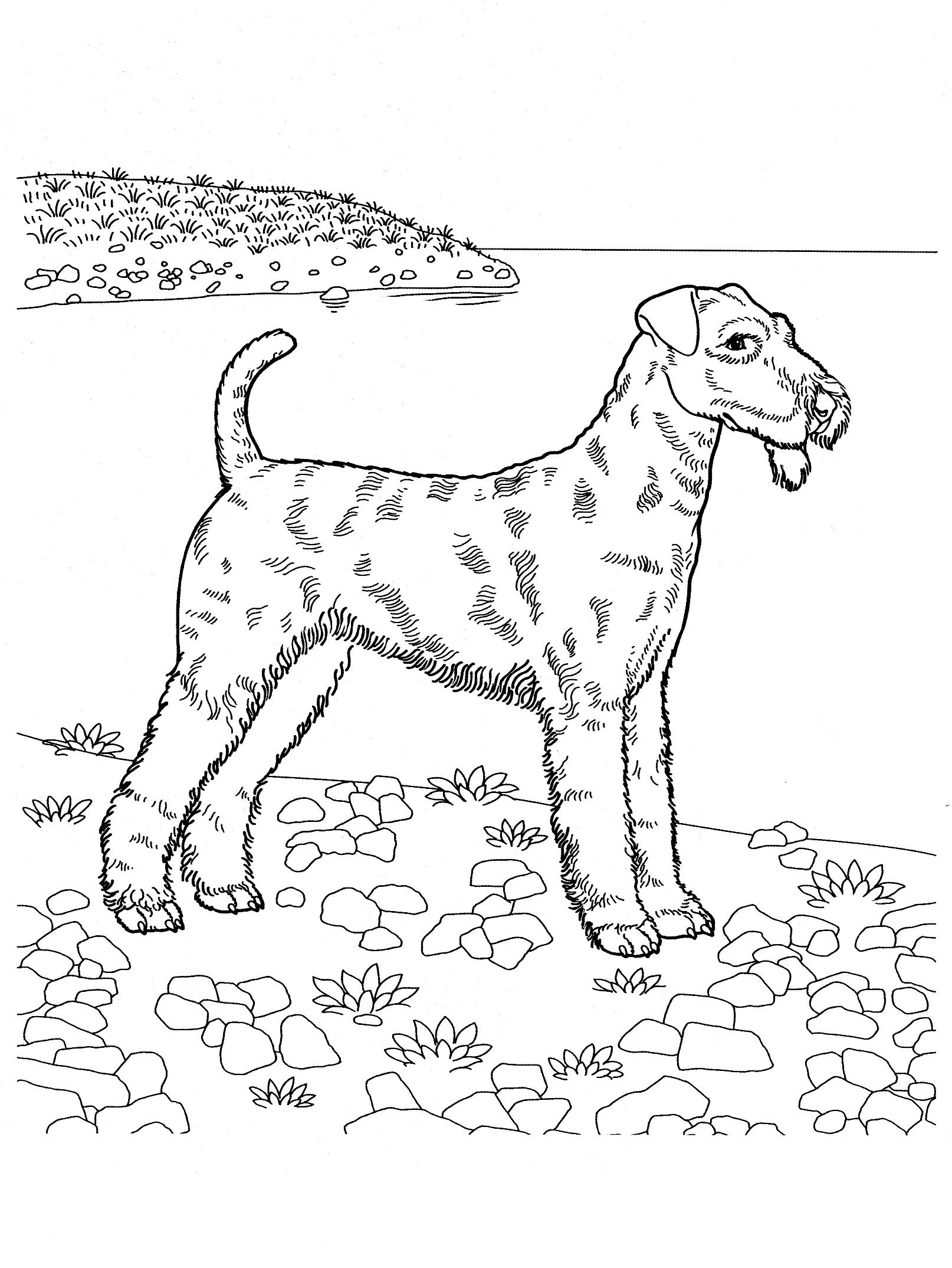 dog_coloring_pages Teenagers coloring pages   Coloring pages ...