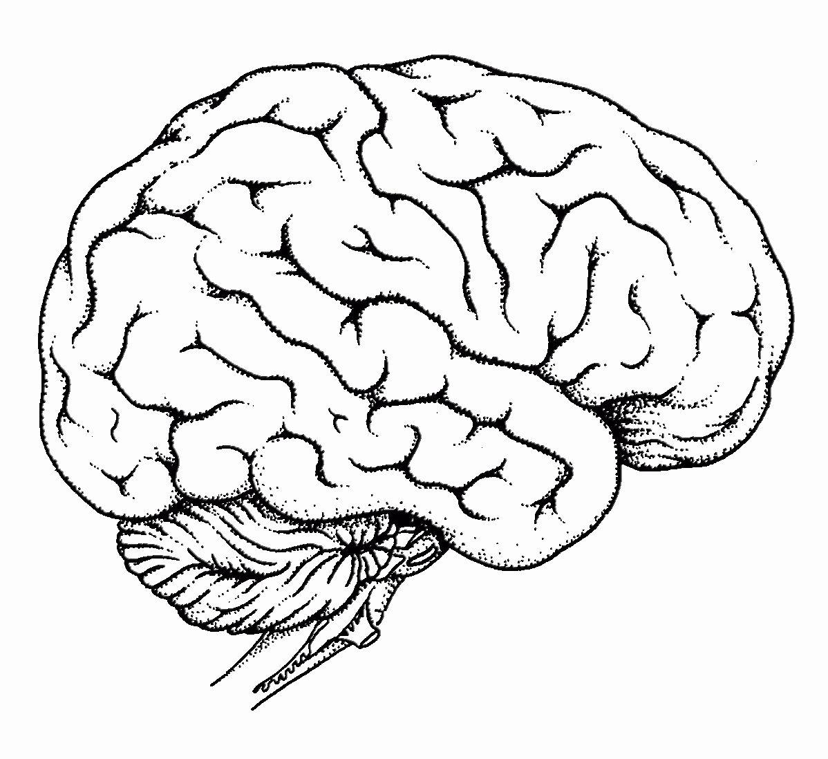 Human Brain Coloring Book Beautiful Human Brain Coloring Page Coloring Home In 2020 Brain Drawing Brain Art Brain Diagram