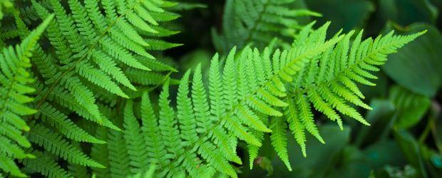 Cultivo de plantas ornamentales   Acelgas.com - Part 6
