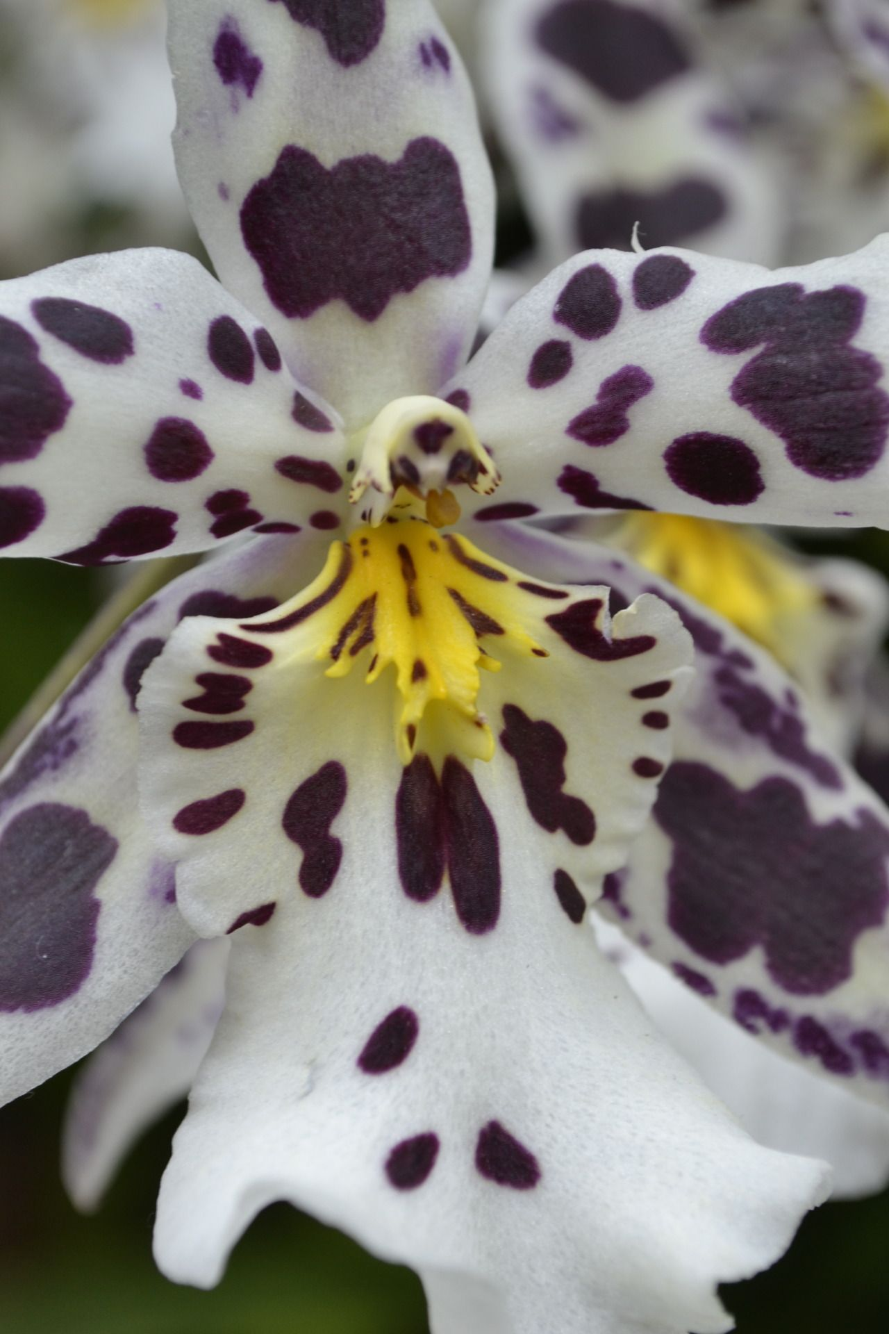 Spotted orchid god you are totally amazing pinterest