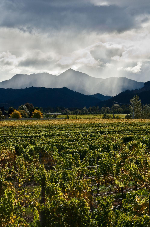 Wine. Staete Landt Vineyards.