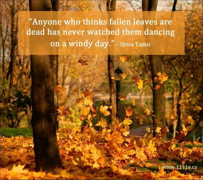 Fall Leaves Dancing In The Breeze Autumn Quotes Autumn Scenes Windy Day