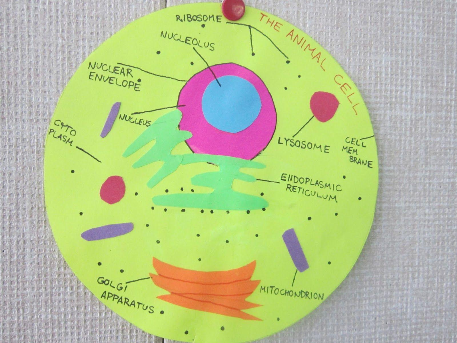 7th Grade Plant Cell Model