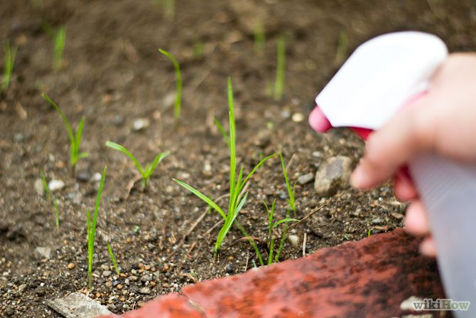 Kill Weeds With Vinegar Instead Of Round-up!!