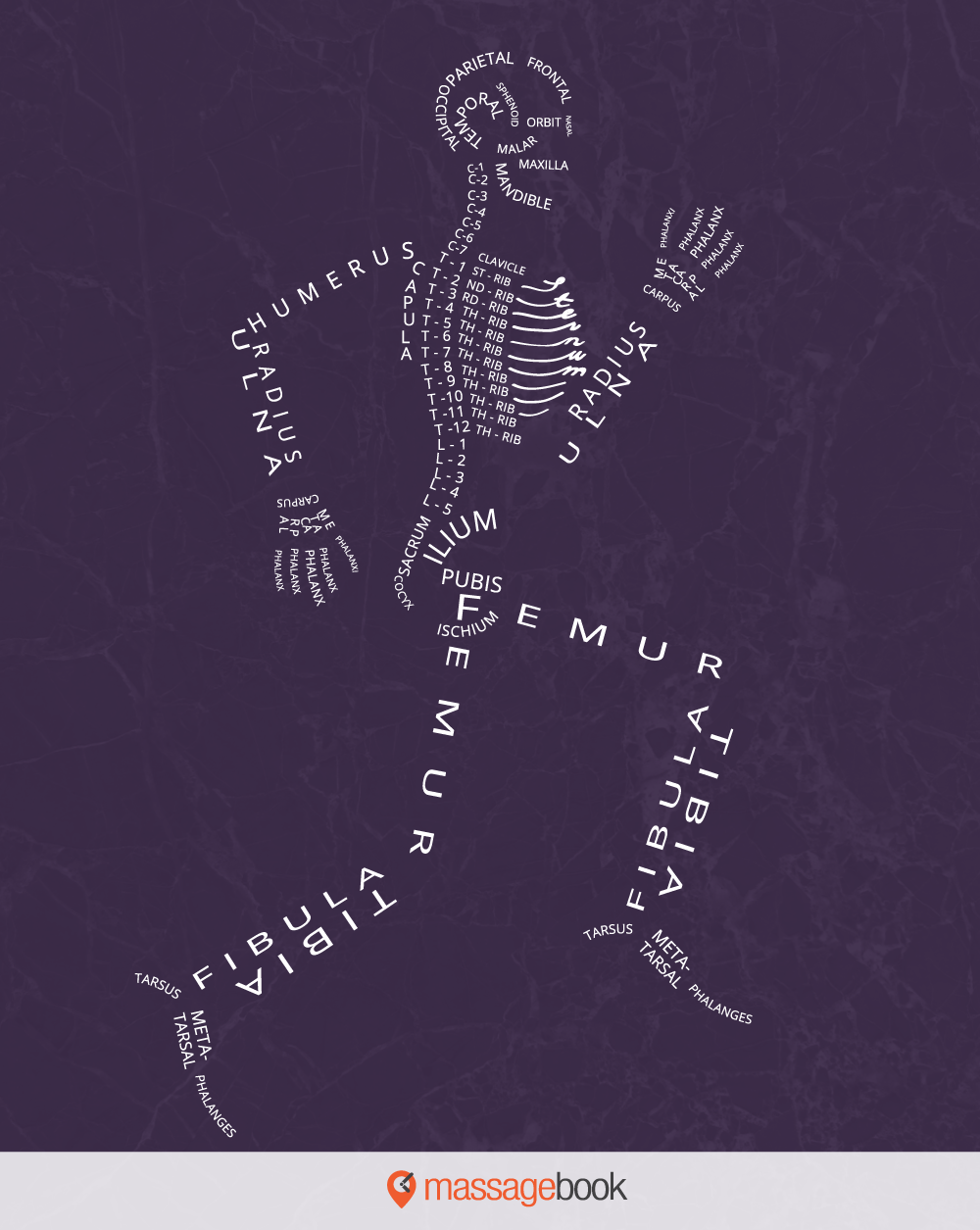 Its Never Been Easier To Learn The Bones Of The Body We Call This
